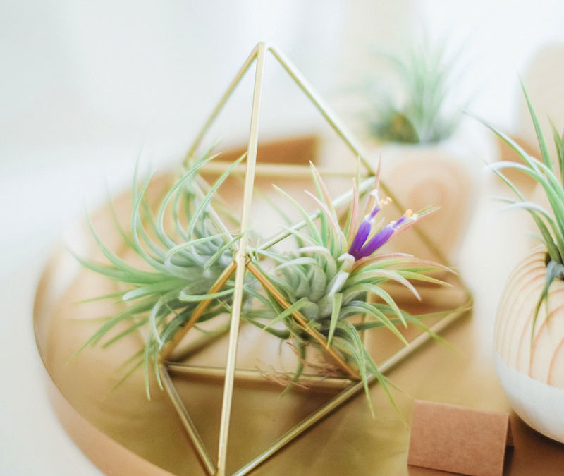 Rośliny we wnętrzach: zielone ściany