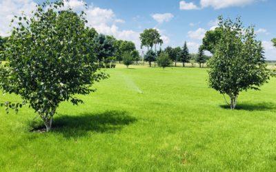 Nawadnianie rolnicze: plantacji borówki, truskawek, malin